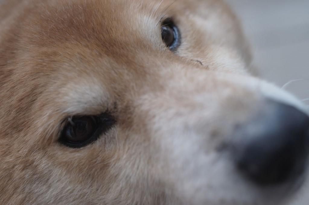 雑種犬・タロー、12才