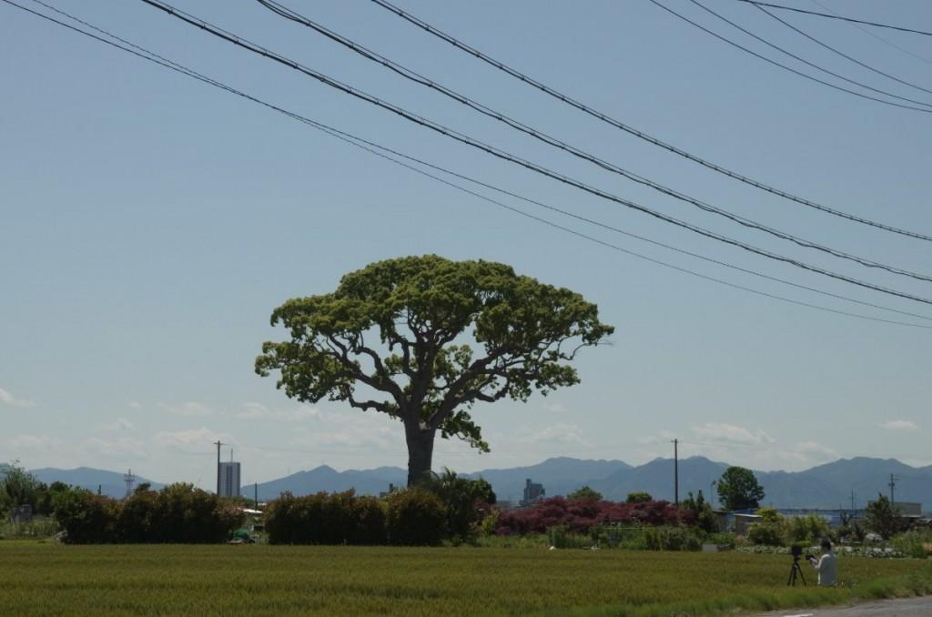 麦畑の畦で大判カメラで撮影している人もいた GXR A16 55.5mm (85mm)