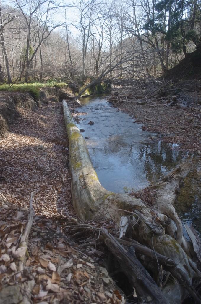倒木も環境と景色を構成する