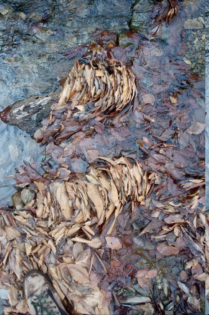 瀬に重なってたまる落ち葉