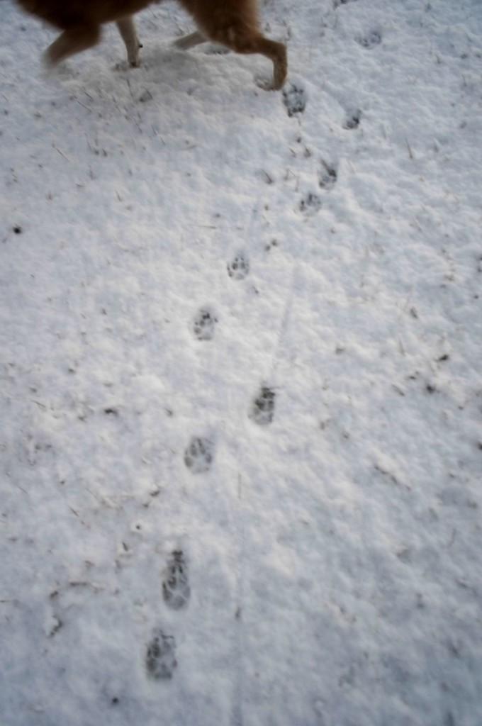 こちらは正月3日。飼い主はこのせいで風邪をひいた?