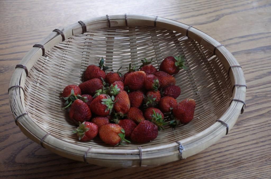 大垣市上石津で1人お住まいのお母さんのイチゴ