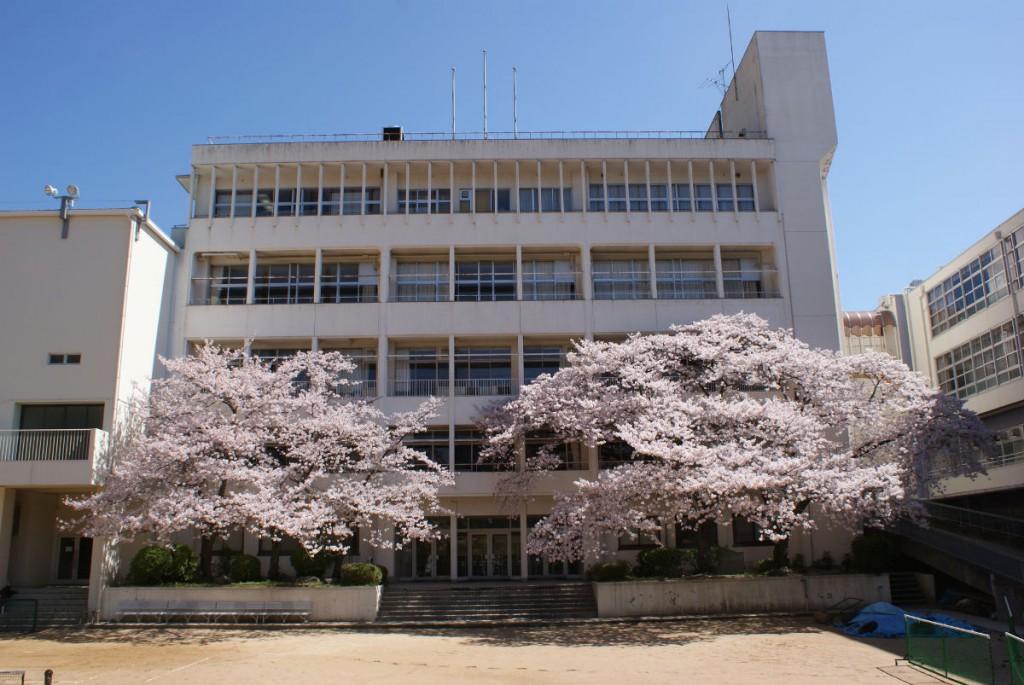 私立神戸龍谷高校の伐られた桜