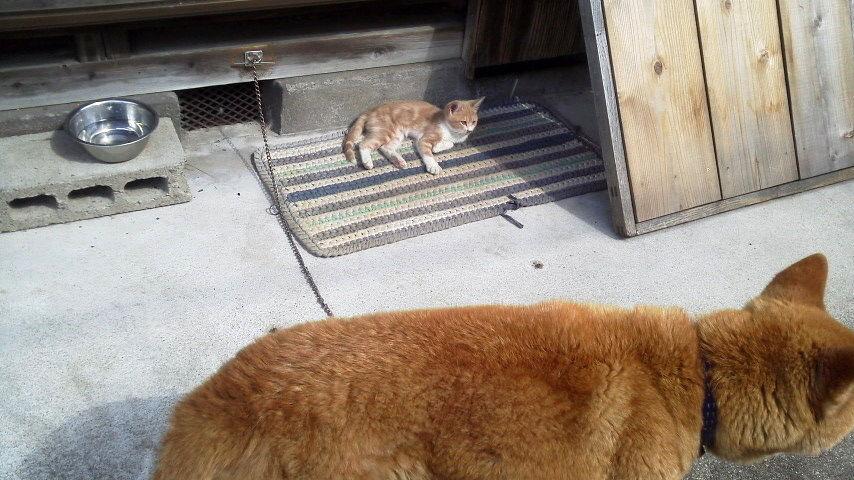 子猫に寝床を盗られる。