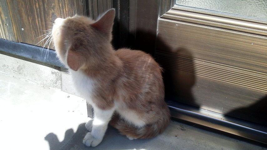 この猫、どこから迷い込んだか(捨てられたか)