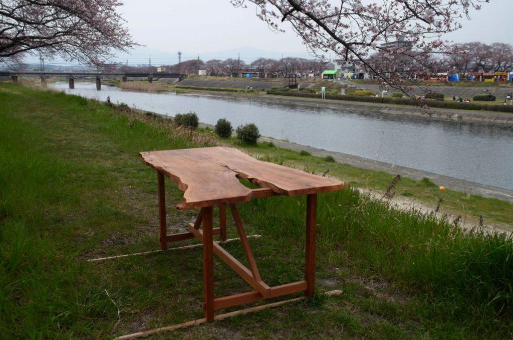 3分咲き程度の海蔵川のほとりで。